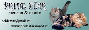 Exotics & Persians Cattery Pridestar